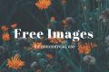 10 Best Websites to Get Free Stock Images for Commercial Use