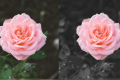 How to Make Everything Black and White Except for One Color in Photoshop