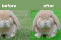 How to Make Grass Green in Photoshop