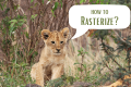 How to Rasterize in Photoshop