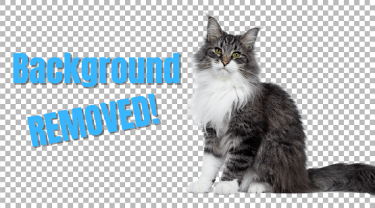 How to Remove Background of an Image in Photoshop