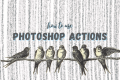 What is a Photoshop Action and How to Use It
